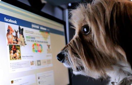 Cão no Facebook